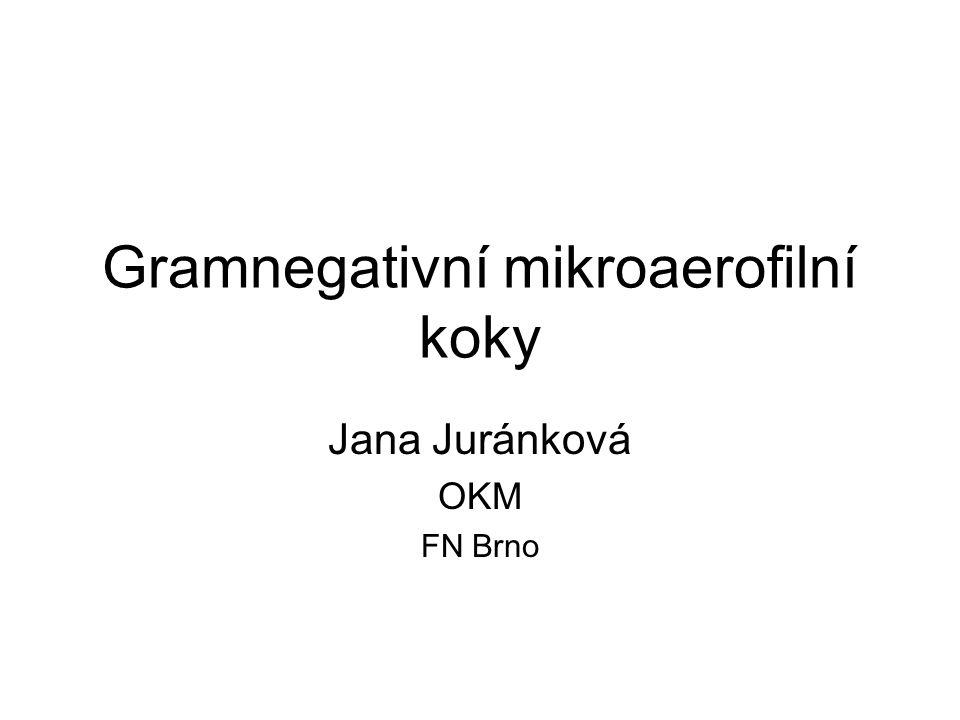 Gramnegativní mikroaerofilní koky Jana Juránková OKM FN Brno