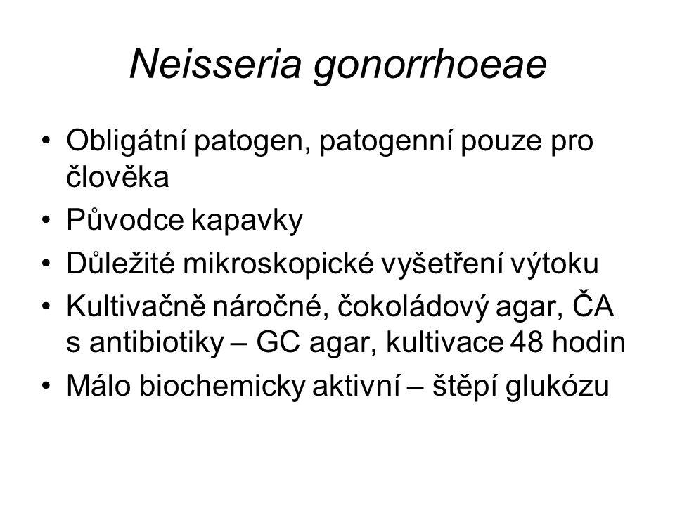 Neisseria gonorrhoeae Obligátní patogen, patogenní pouze pro člověka Původce kapavky Důležité mikroskopické vyšetření výtoku Kultivačně náročné, čokol