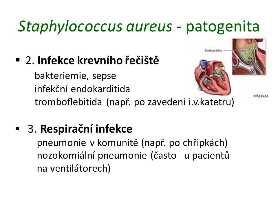 Staphylococcus aureus - patogenita  2.