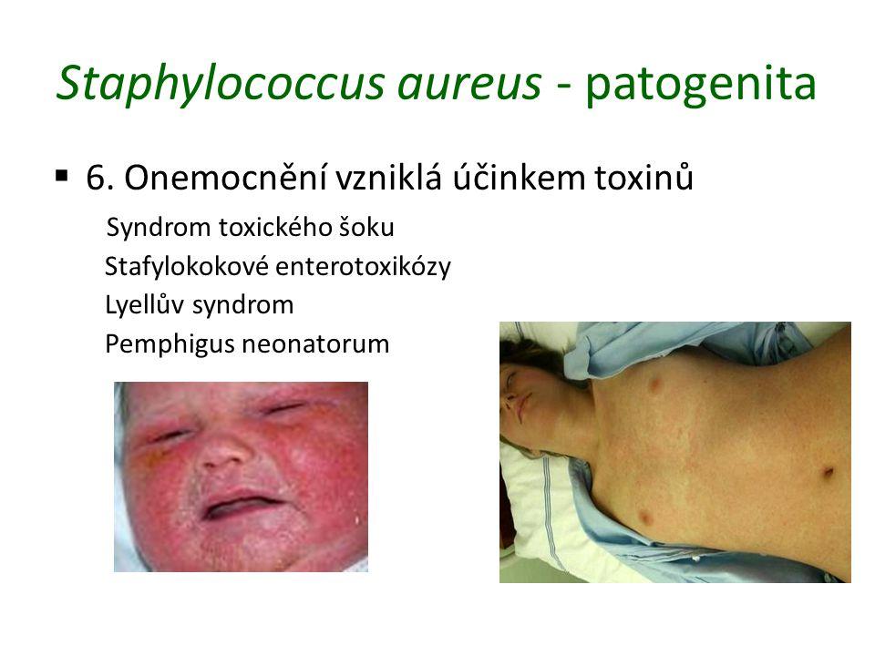 Staphylococcus aureus - patogenita  6.