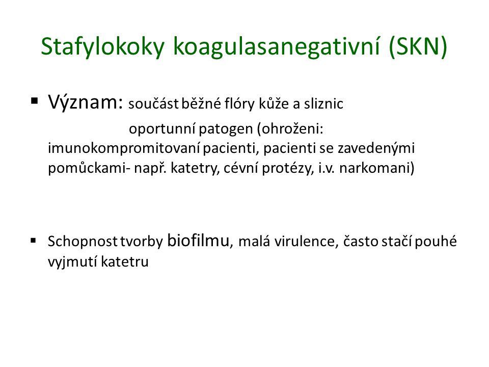 Stafylokoky koagulasanegativní (SKN)  Význam: součást běžné flóry kůže a sliznic oportunní patogen (ohroženi: imunokompromitovaní pacienti, pacienti se zavedenými pomůckami- např.
