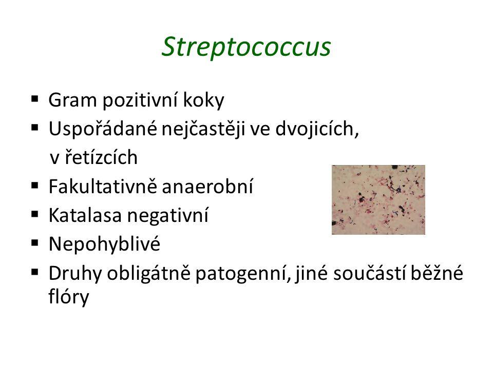 Streptococcus  Gram pozitivní koky  Uspořádané nejčastěji ve dvojicích, v řetízcích  Fakultativně anaerobní  Katalasa negativní  Nepohyblivé  Druhy obligátně patogenní, jiné součástí běžné flóry