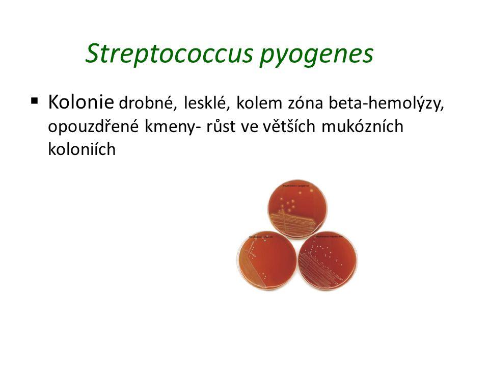 Streptococcus pyogenes  Kolonie drobné, lesklé, kolem zóna beta-hemolýzy, opouzdřené kmeny- růst ve větších mukózních koloniích