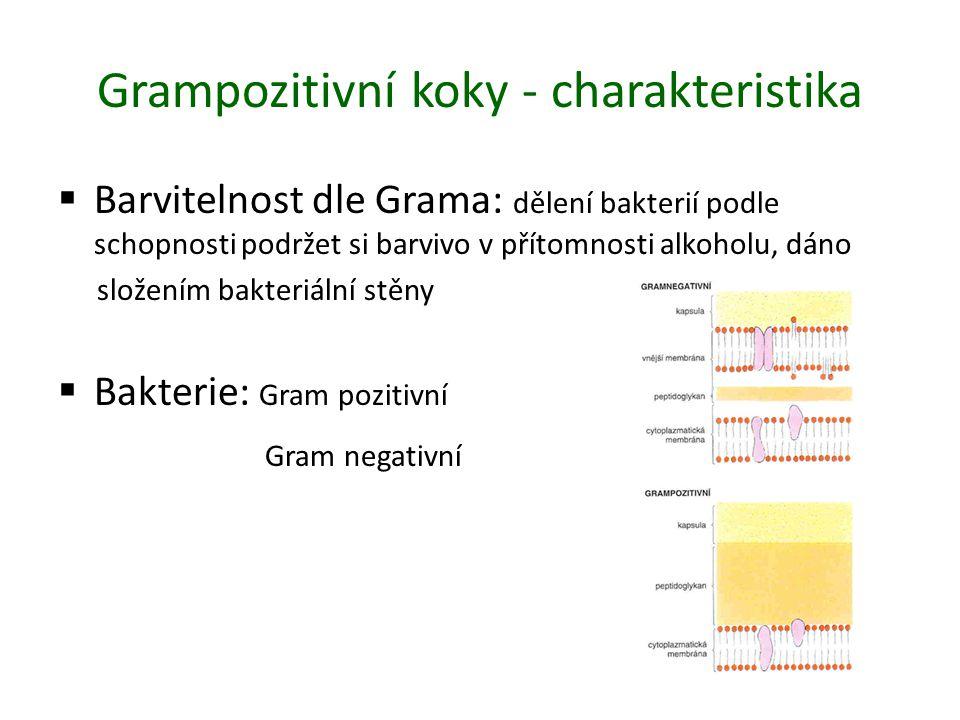 Grampozitivní koky - charakteristika  Barvitelnost dle Grama: dělení bakterií podle schopnosti podržet si barvivo v přítomnosti alkoholu, dáno složením bakteriální stěny  Bakterie: Gram pozitivní Gram negativní