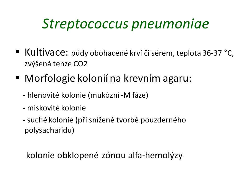 Streptococcus pneumoniae  Kultivace: půdy obohacené krví či sérem, teplota 36-37 °C, zvýšená tenze CO2  Morfologie kolonií na krevním agaru: - hlenovité kolonie (mukózní -M fáze) - miskovité kolonie - suché kolonie (při snížené tvorbě pouzderného polysacharidu) kolonie obklopené zónou alfa-hemolýzy