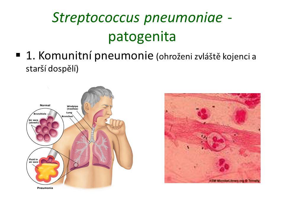 Streptococcus pneumoniae - patogenita  1. Komunitní pneumonie (ohroženi zvláště kojenci a starší dospělí)