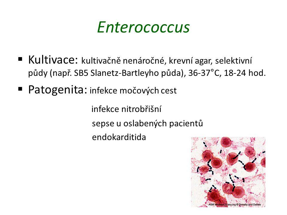 Enterococcus  Kultivace: kultivačně nenáročné, krevní agar, selektivní půdy (např. SB5 Slanetz-Bartleyho půda), 36-37°C, 18-24 hod.  Patogenita: inf