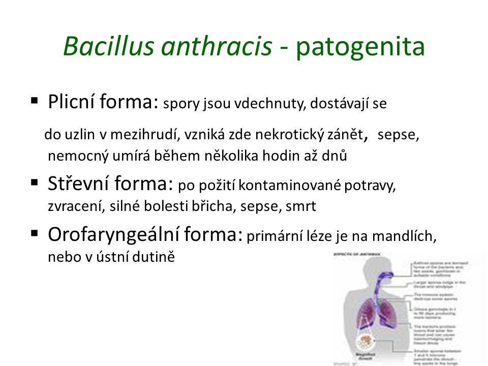 Bacillus anthracis - patogenita  Plicní forma: spory jsou vdechnuty, dostávají se do uzlin v mezihrudí, vzniká zde nekrotický zánět, sepse, nemocný u