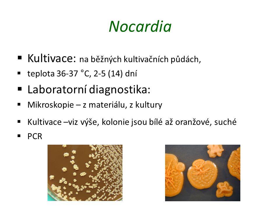 Nocardia  Kultivace: na běžných kultivačních půdách,  teplota 36-37 °C, 2-5 (14) dní  Laboratorní diagnostika:  Mikroskopie – z materiálu, z kultury  Kultivace –viz výše, kolonie jsou bílé až oranžové, suché  PCR