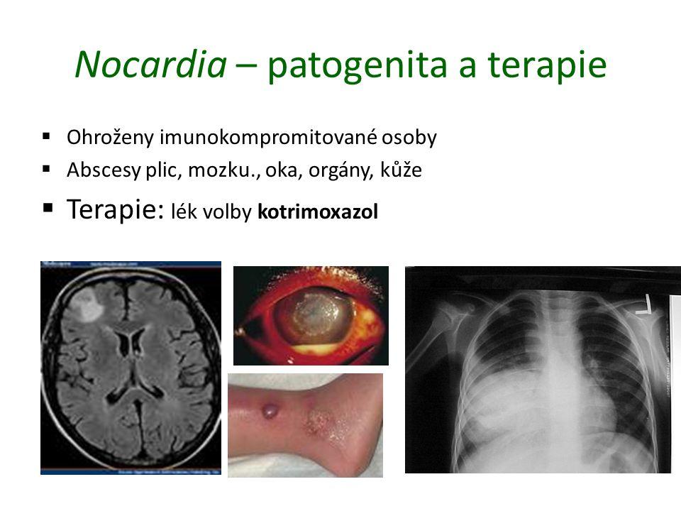 Nocardia – patogenita a terapie  Ohroženy imunokompromitované osoby  Abscesy plic, mozku., oka, orgány, kůže  Terapie: lék volby kotrimoxazol