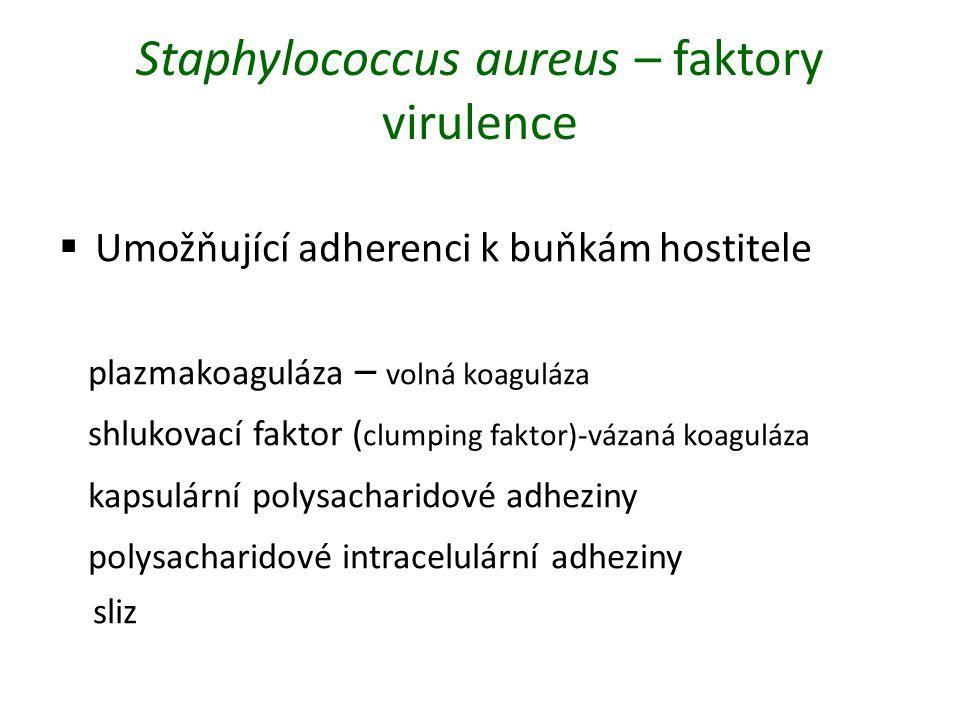 Staphylococcus aureus – faktory virulence  Umožňující adherenci k buňkám hostitele plazmakoaguláza – volná koaguláza shlukovací faktor ( clumping faktor)-vázaná koaguláza kapsulární polysacharidové adheziny polysacharidové intracelulární adheziny sliz