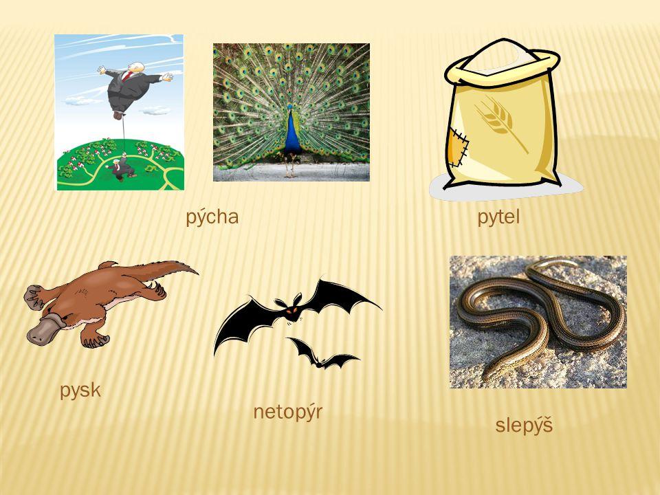 pýchapytel pysk netopýr slepýš