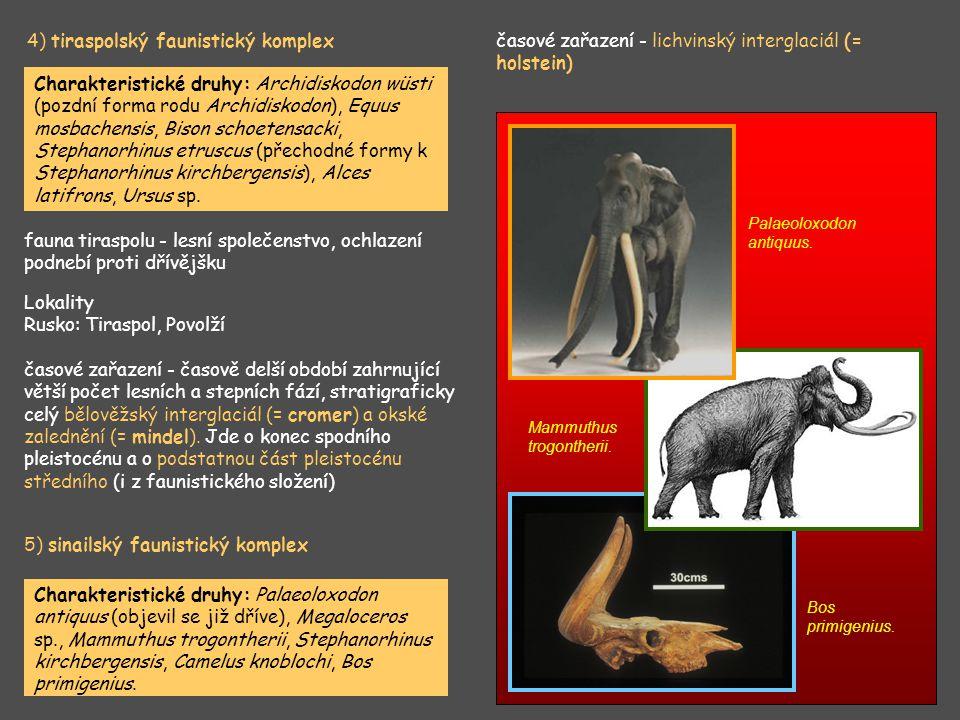4) tiraspolský faunistický komplex Charakteristické druhy: Archidiskodon wüsti (pozdní forma rodu Archidiskodon), Equus mosbachensis, Bison schoetensa