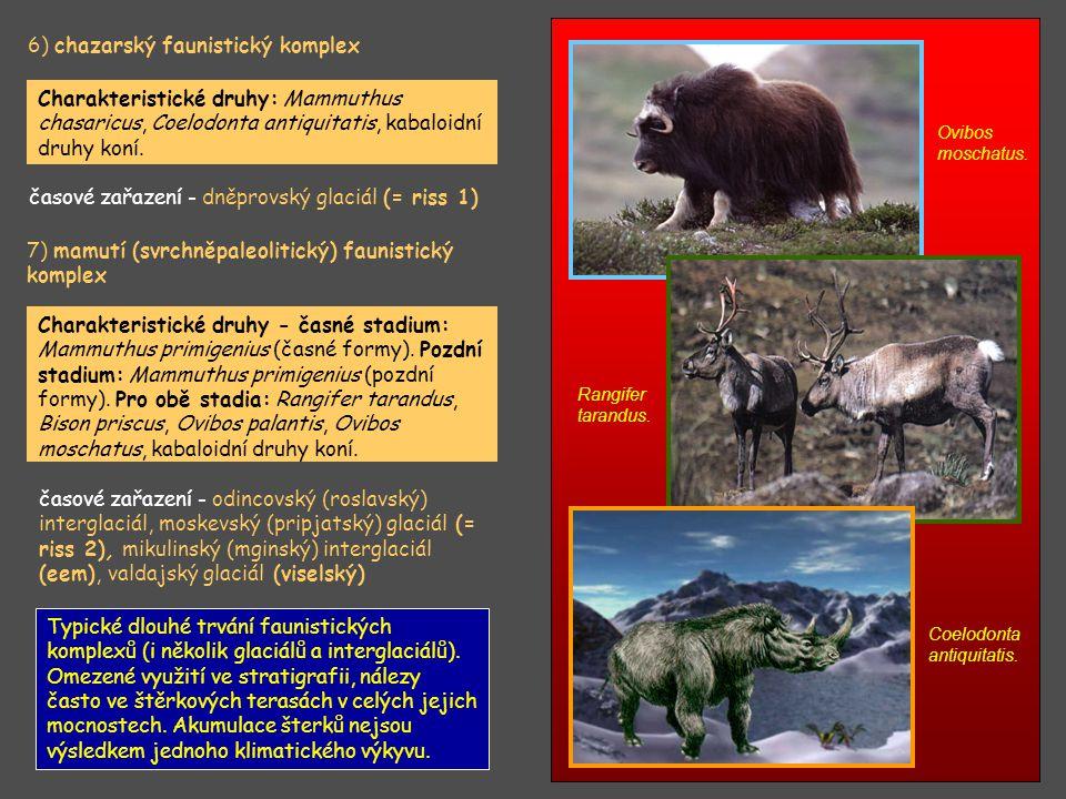 6) chazarský faunistický komplex Charakteristické druhy: Mammuthus chasaricus, Coelodonta antiquitatis, kabaloidní druhy koní. časové zařazení - dněpr
