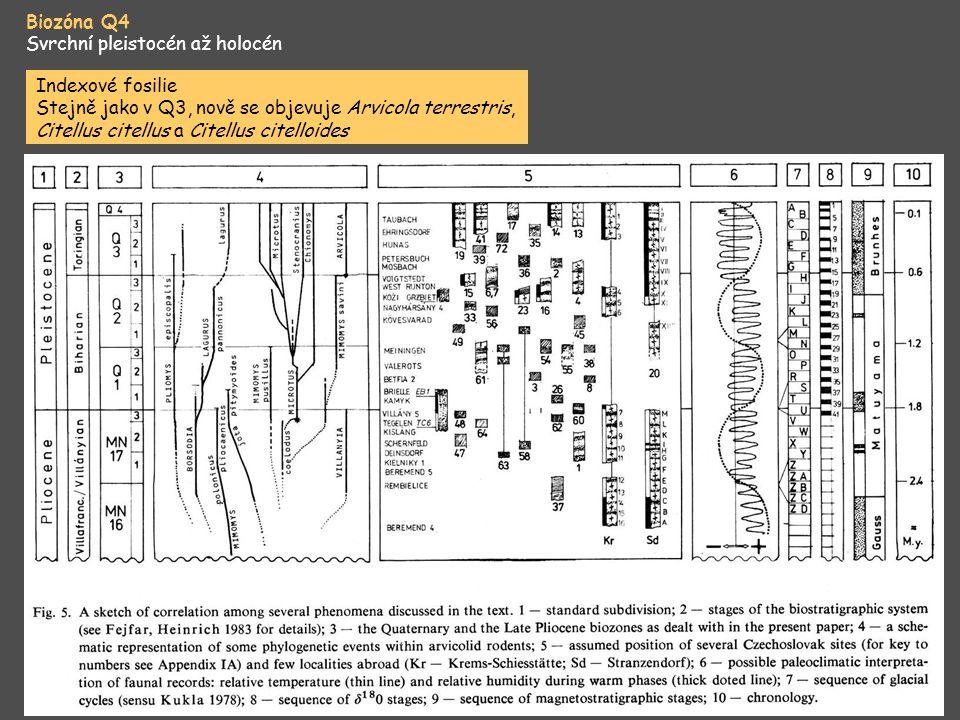 Biozóna Q4 Svrchní pleistocén až holocén Indexové fosilie Stejně jako v Q3, nově se objevuje Arvicola terrestris, Citellus citellus a Citellus citello