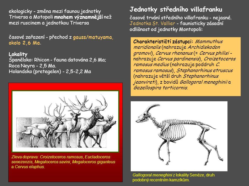 Biostratigrafické využití drobných savců Horáček (1979); Horáček, Ložek (1988) Biozóna Q1 Spodní část spodního pleistocénu, spodní bihar, tj.