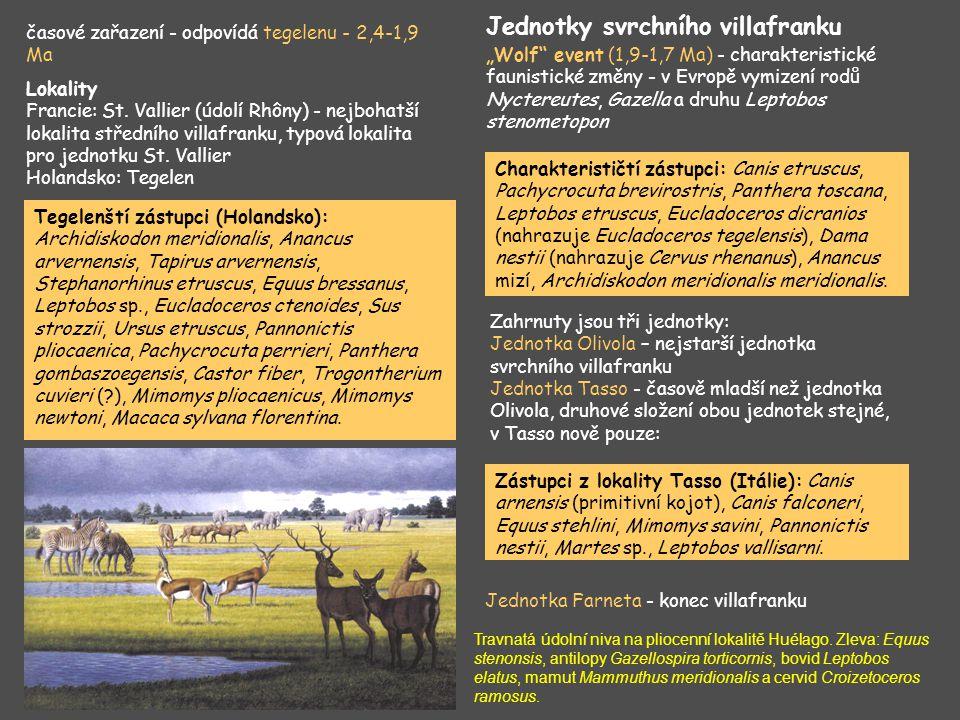 Tegelenští zástupci (Holandsko): Archidiskodon meridionalis, Anancus arvernensis, Tapirus arvernensis, Stephanorhinus etruscus, Equus bressanus, Lepto