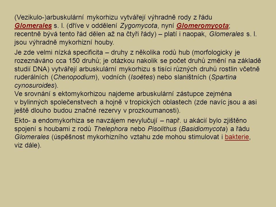 (Vezikulo-)arbuskulární mykorhizu vytvářejí výhradně rody z řádu Glomerales s. l. (dříve v oddělení Zygomycota, nyní Glomeromycota; recentně bývá tent