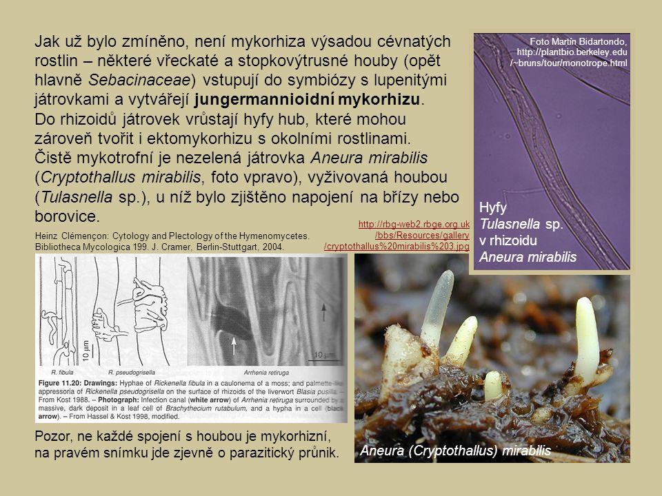 Jak už bylo zmíněno, není mykorhiza výsadou cévnatých rostlin – některé vřeckaté a stopkovýtrusné houby (opět hlavně Sebacinaceae) vstupují do symbióz