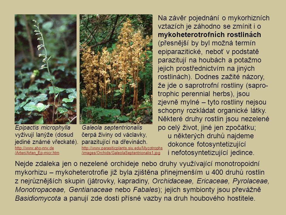 Nejde zdaleka jen o nezelené orchideje nebo druhy využívající monotropoidní mykorhizu – mykoheterotrofie již byla zjištěna přinejmenším u 400 druhů ro