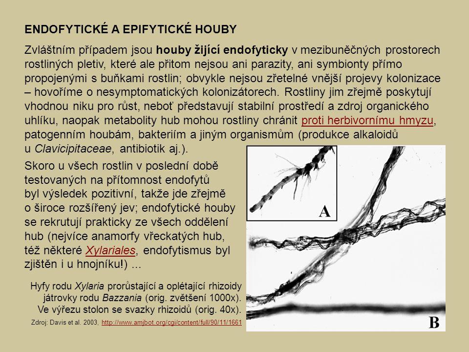 ENDOFYTICKÉ A EPIFYTICKÉ HOUBY Zvláštním případem jsou houby žijící endofyticky v mezibuněčných prostorech rostliných pletiv, které ale přitom nejsou
