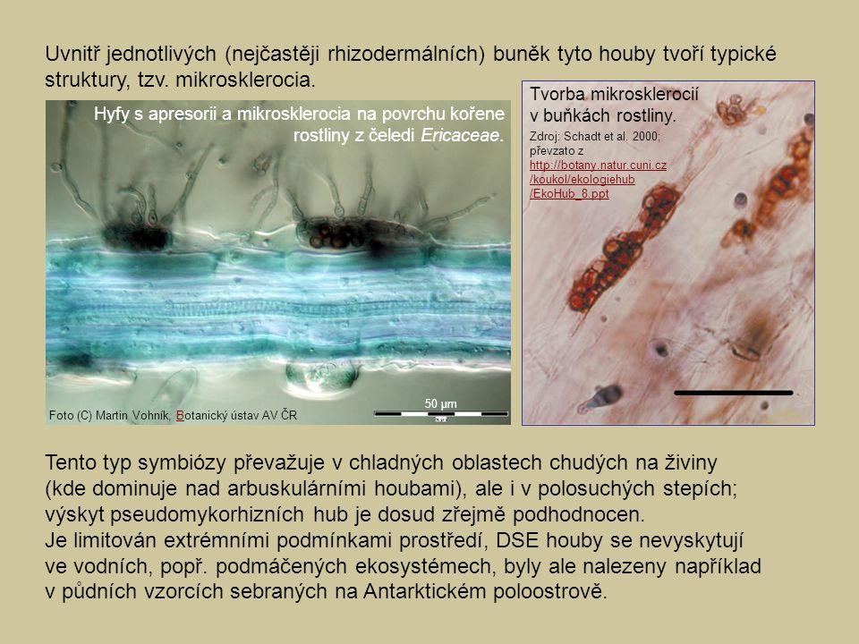 Tento typ symbiózy převažuje v chladných oblastech chudých na živiny (kde dominuje nad arbuskulárními houbami), ale i v polosuchých stepích; výskyt ps