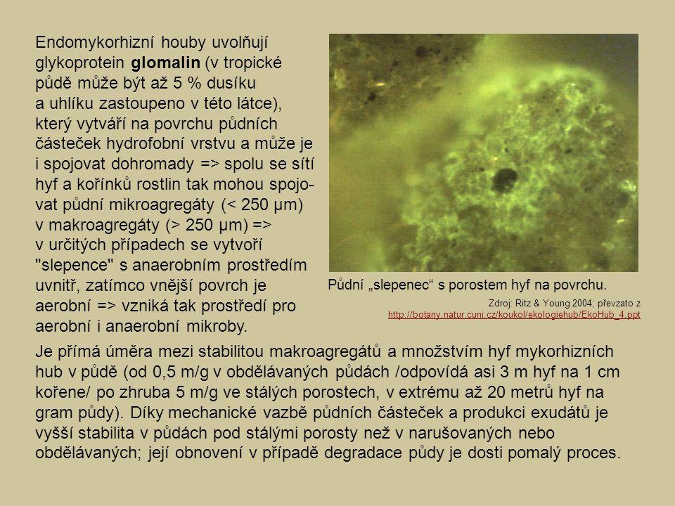 Endomykorhizní houby uvolňují glykoprotein glomalin (v tropické půdě může být až 5 % dusíku a uhlíku zastoupeno v této látce), který vytváří na povrch