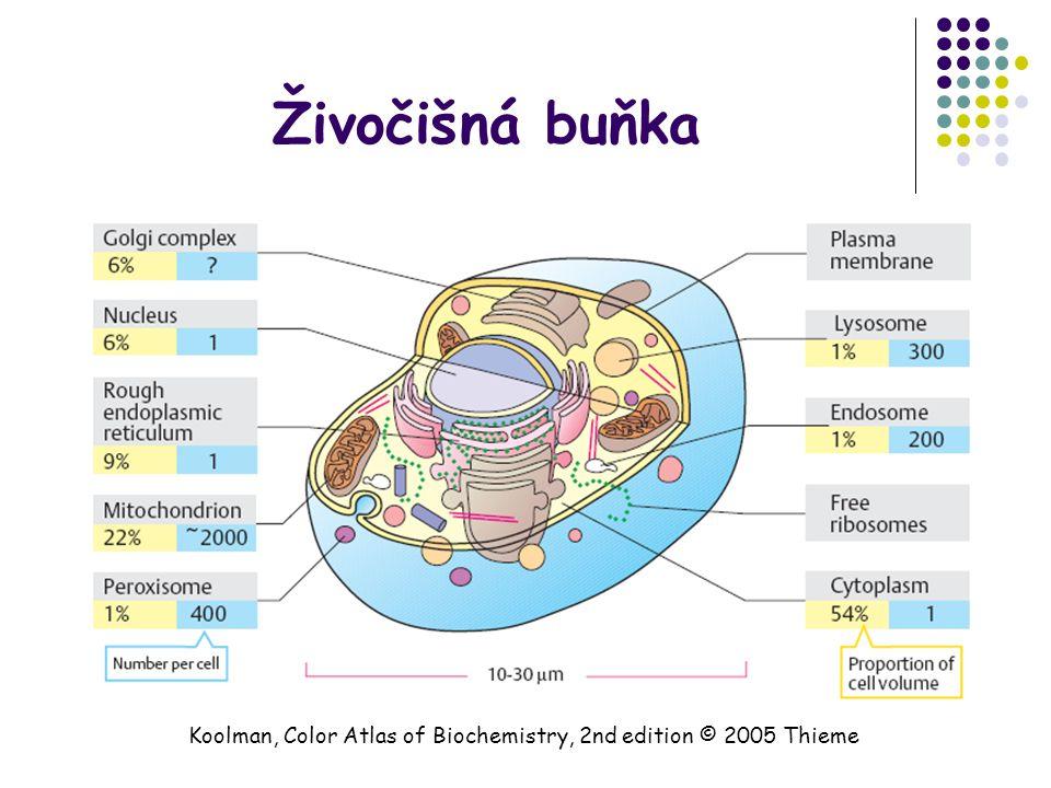 Živočišná buňka Koolman, Color Atlas of Biochemistry, 2nd edition © 2005 Thieme