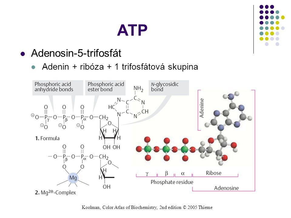ATP Adenosin-5-trifosfát Adenin + ribóza + 1 trifosfátová skupina Koolman, Color Atlas of Biochemistry, 2nd edition © 2005 Thieme