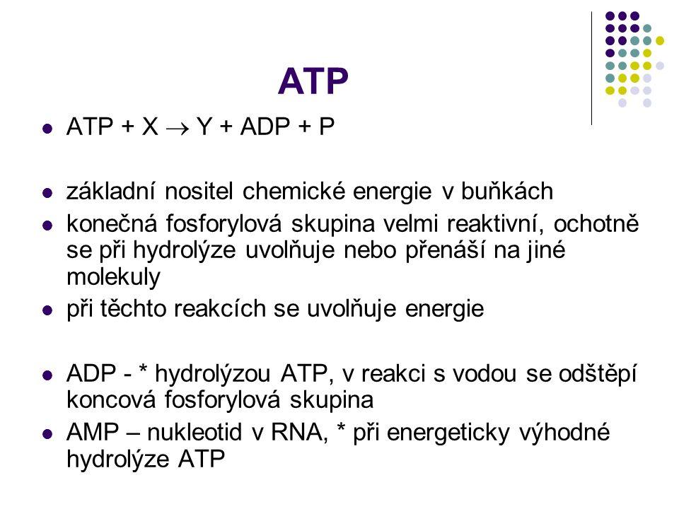 ATP ATP + X  Y + ADP + P základní nositel chemické energie v buňkách konečná fosforylová skupina velmi reaktivní, ochotně se při hydrolýze uvolňuje n