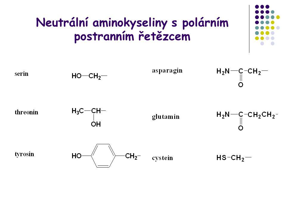 Neutrální aminokyseliny s polárním postranním řetězcem