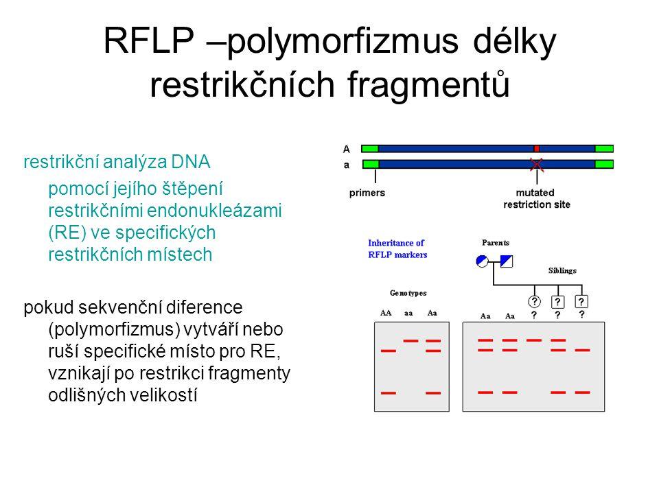 RFLP –polymorfizmus délky restrikčních fragmentů restrikční analýza DNA pomocí jejího štěpení restrikčními endonukleázami (RE) ve specifických restrikčních místech pokud sekvenční diference (polymorfizmus) vytváří nebo ruší specifické místo pro RE, vznikají po restrikci fragmenty odlišných velikostí