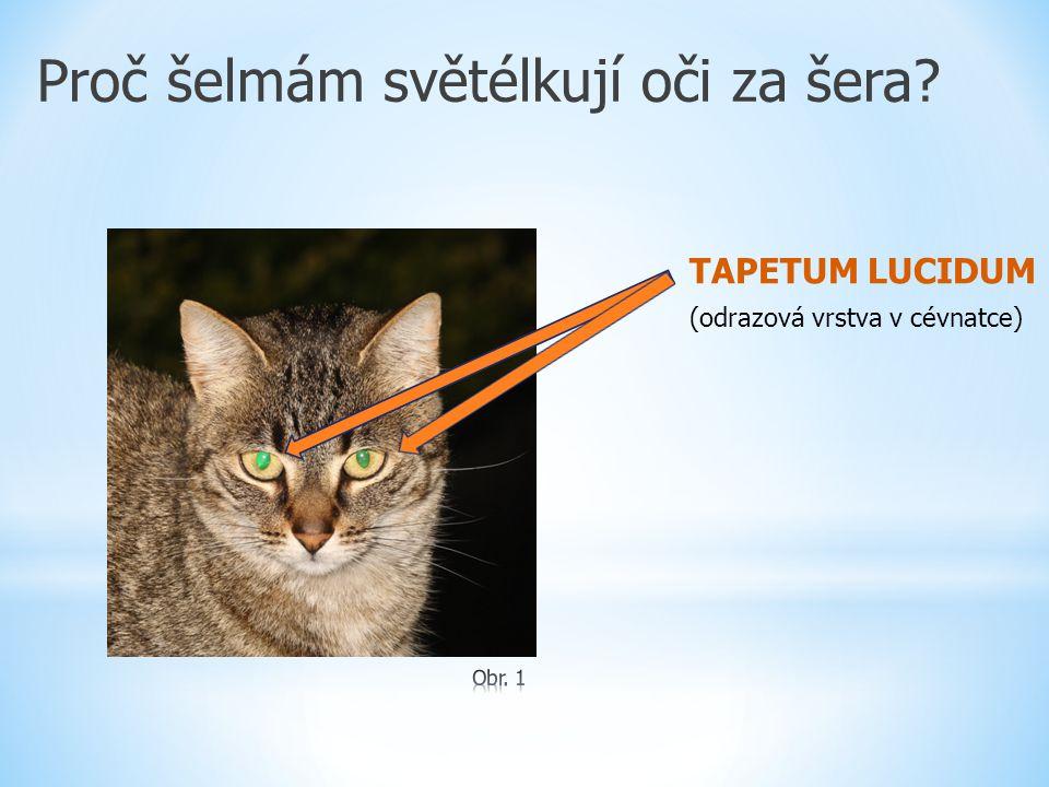Proč šelmám světélkují oči za šera? TAPETUM LUCIDUM (odrazová vrstva v cévnatce)
