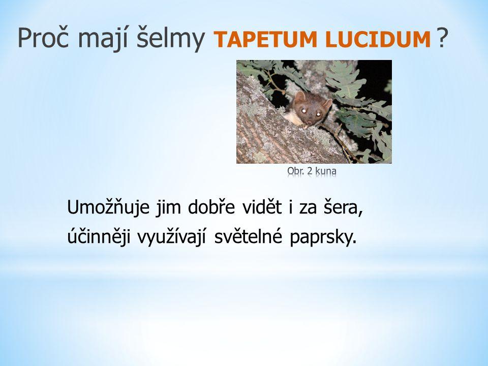 Proč mají šelmy TAPETUM LUCIDUM ? Umožňuje jim dobře vidět i za šera, účinněji využívají světelné paprsky.