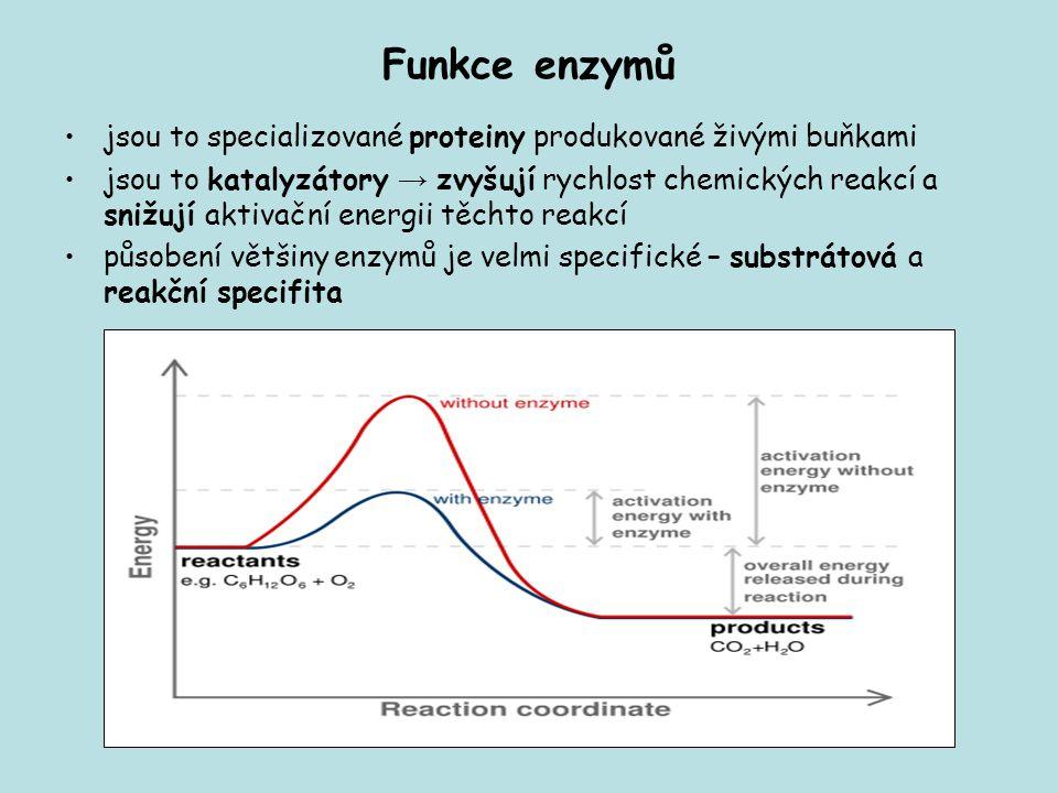 Funkce enzymů jsou to specializované proteiny produkované živými buňkami jsou to katalyzátory → zvyšují rychlost chemických reakcí a snižují aktivační energii těchto reakcí působení většiny enzymů je velmi specifické – substrátová a reakční specifita