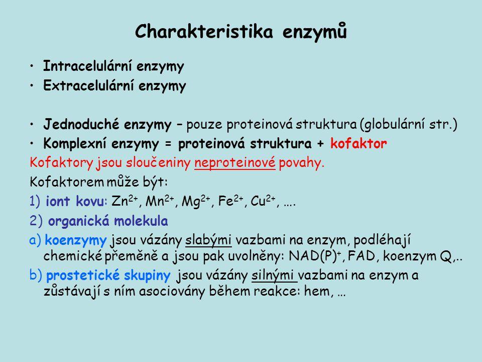 Charakteristika enzymů Intracelulární enzymy Extracelulární enzymy Jednoduché enzymy – pouze proteinová struktura (globulární str.) Komplexní enzymy =