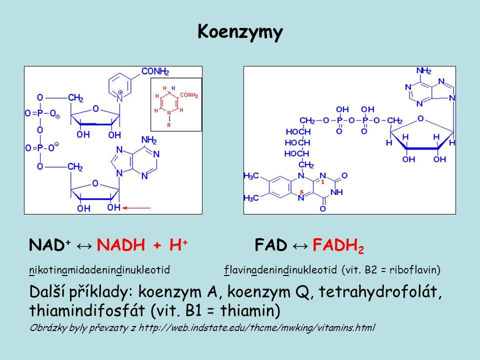 Koenzymy NAD + ↔ NADH + H + FAD ↔ FADH 2 nikotinamidadenindinukleotid flavinadenindinukleotid (vit. B2 = riboflavin) Další příklady: koenzym A, koenzy