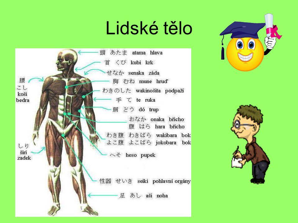 Vyjmenuj části lidského těla: 1.Trup,hlava,krk,nohy,ruce 2.Vlasy,oči,nos,břicho 12345