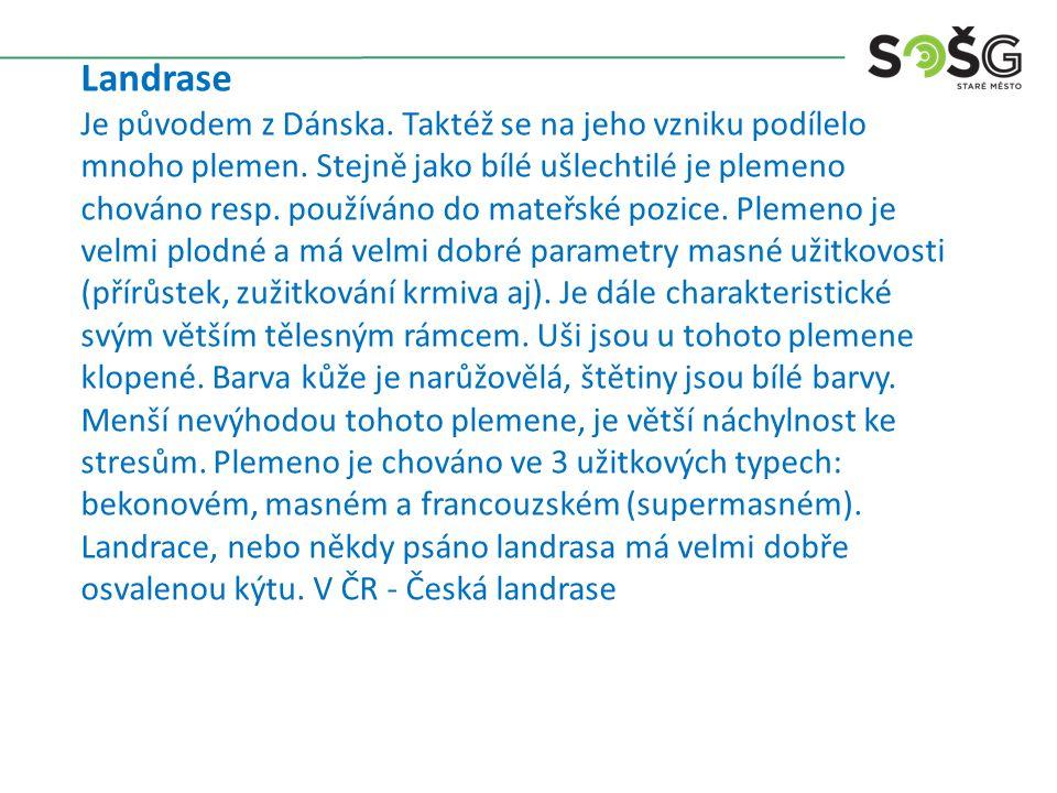 Přeštické černostrakaté Plemeno je našim národním plemenem, které vzniklo v západních Čechách v oblasti přešticka a královicka.