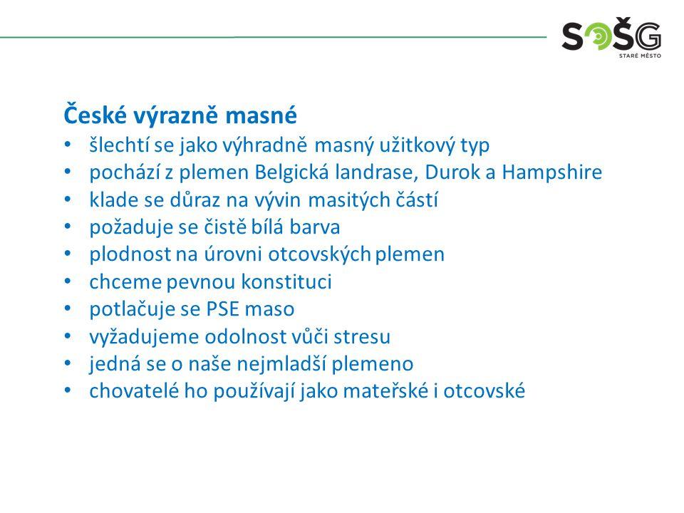 České výrazně masné šlechtí se jako výhradně masný užitkový typ pochází z plemen Belgická landrase, Durok a Hampshire klade se důraz na vývin masitých