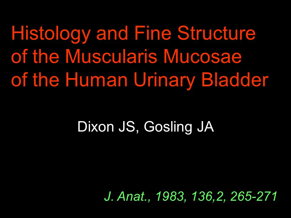Histology and Fine Structure of the Muscularis Mucosae of the Human Urinary Bladder Dixon JS, Gosling JA J. Anat., 1983, 136,2, 265-271