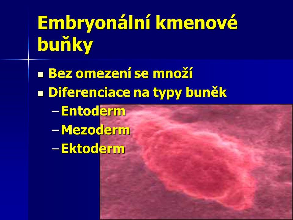 Embryonální kmenové buňky Bez omezení se množí Bez omezení se množí Diferenciace na typy buněk Diferenciace na typy buněk –Entoderm –Mezoderm –Ektoder