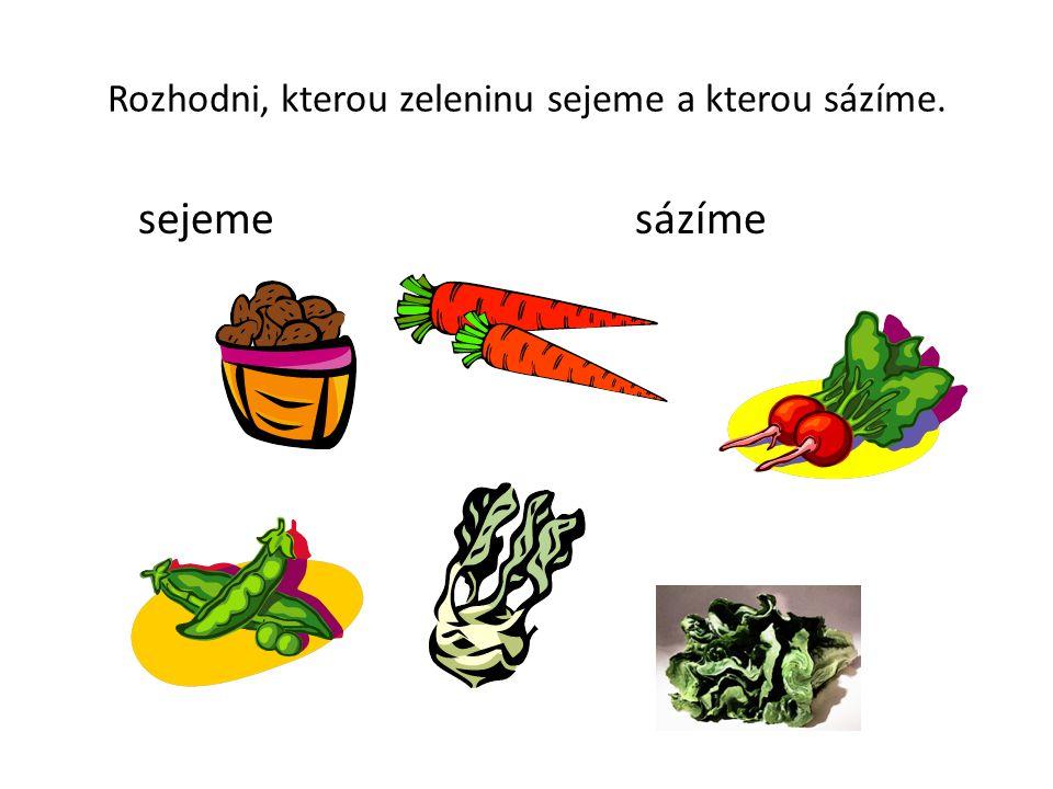 Rozhodni, kterou zeleninu sejeme a kterou sázíme. sejeme sázíme