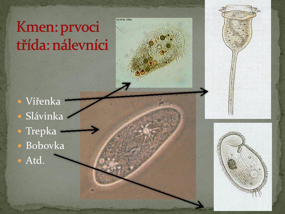 Vířenka Slávinka Trepka Bobovka Atd.