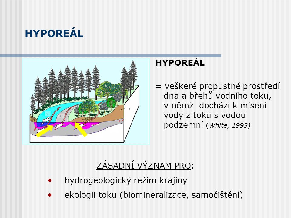 HYPOREÁL ZÁSADNÍ VÝZNAM PRO: hydrogeologický režim krajiny ekologii toku (biomineralizace, samočištění) HYPOREÁL = veškeré propustné prostředí dna a břehů vodního toku, v němž dochází k mísení vody z toku s vodou podzemní (White, 1993)