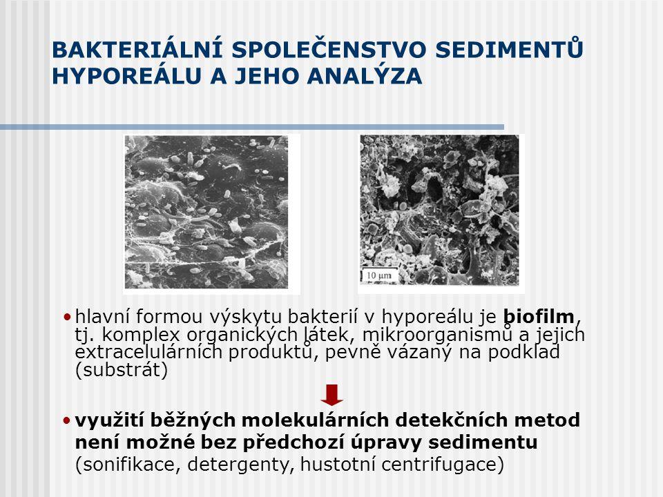 BAKTERIÁLNÍ SPOLEČENSTVO SEDIMENTŮ HYPOREÁLU A JEHO ANALÝZA hlavní formou výskytu bakterií v hyporeálu je biofilm, tj.