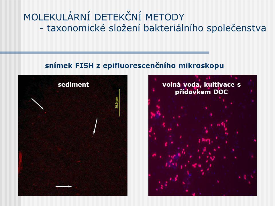 MOLEKULÁRNÍ DETEKČNÍ METODY - taxonomické složení bakteriálního společenstva sedimentvolná voda, kultivace s přídavkem DOC snímek FISH z epifluorescenčního mikroskopu