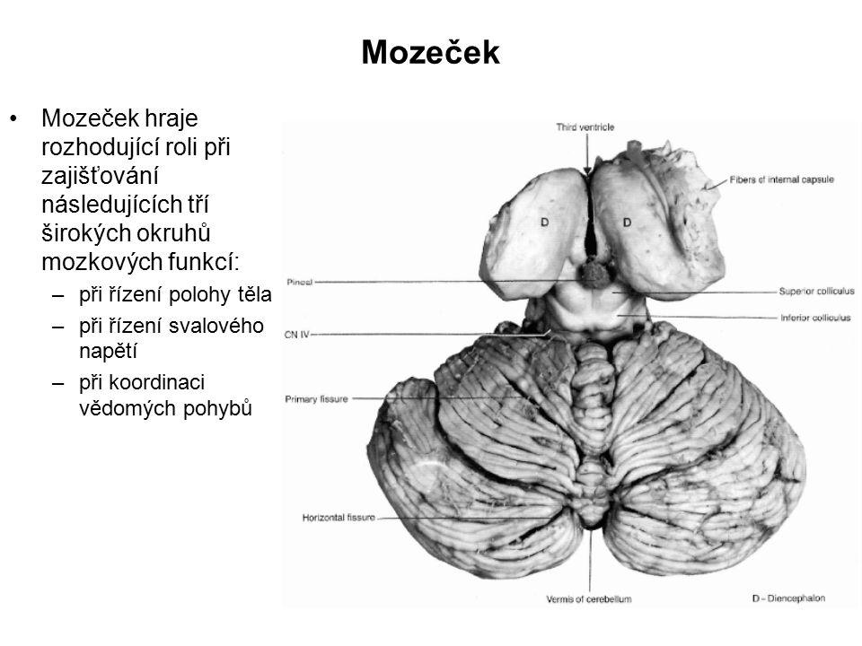 Stimulace v hloubi mozku Invazivní metoda Přímé působení elektrických pulsů Některé výsledky - téměř okamžitě + dlouhodobý efekt Velká přesnost zaměření Málo pacientů (u deprese) Málo poznatků o přesném působení Aplikace pro zmenšení třesu u Parkinsonovy nemoci 3-5 V pulsy o frekvenci 100 Hz Léčba obsesivně kompulsivní poruchy