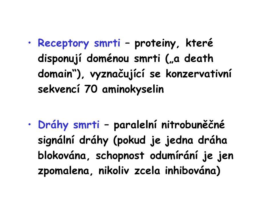 """Receptory smrti – proteiny, které disponují doménou smrti (""""a death domain ), vyznačující se konzervativní sekvencí 70 aminokyselin Dráhy smrti – paralelní nitrobuněčné signální dráhy (pokud je jedna dráha blokována, schopnost odumírání je jen zpomalena, nikoliv zcela inhibována)"""