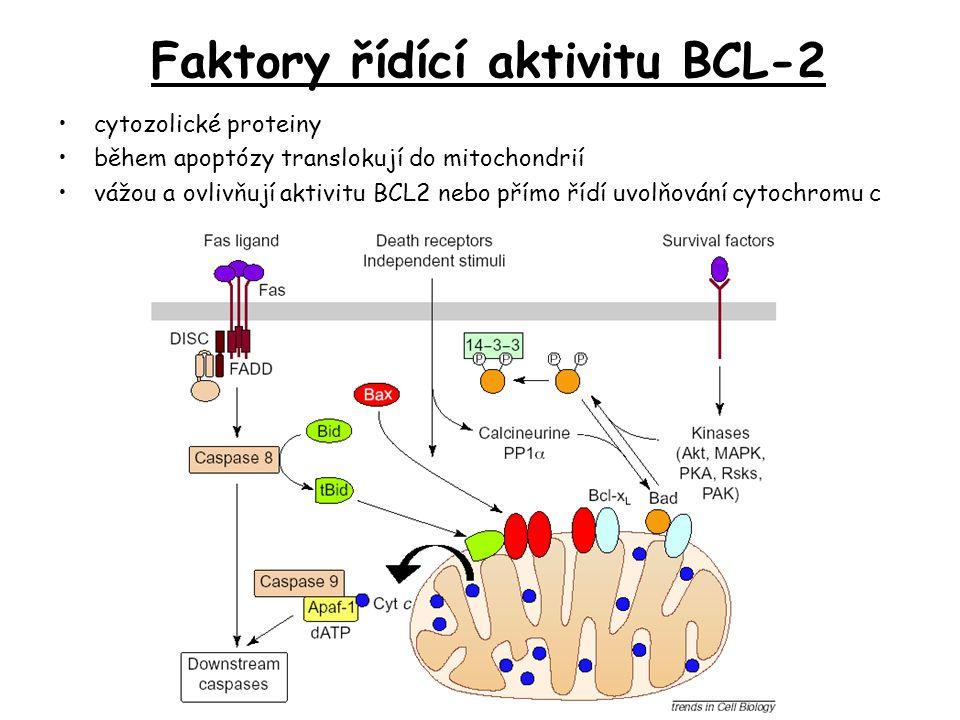 Faktory řídící aktivitu BCL-2 cytozolické proteiny během apoptózy translokují do mitochondrií vážou a ovlivňují aktivitu BCL2 nebo přímo řídí uvolňová